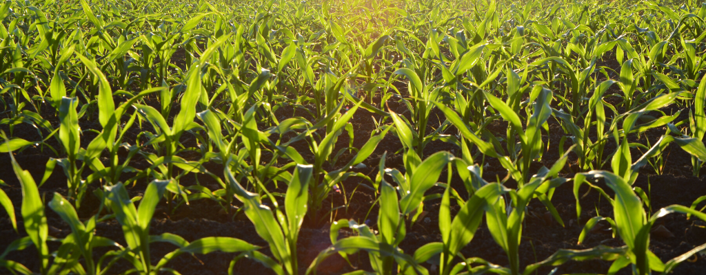 pianalytix machine learning in agriculture
